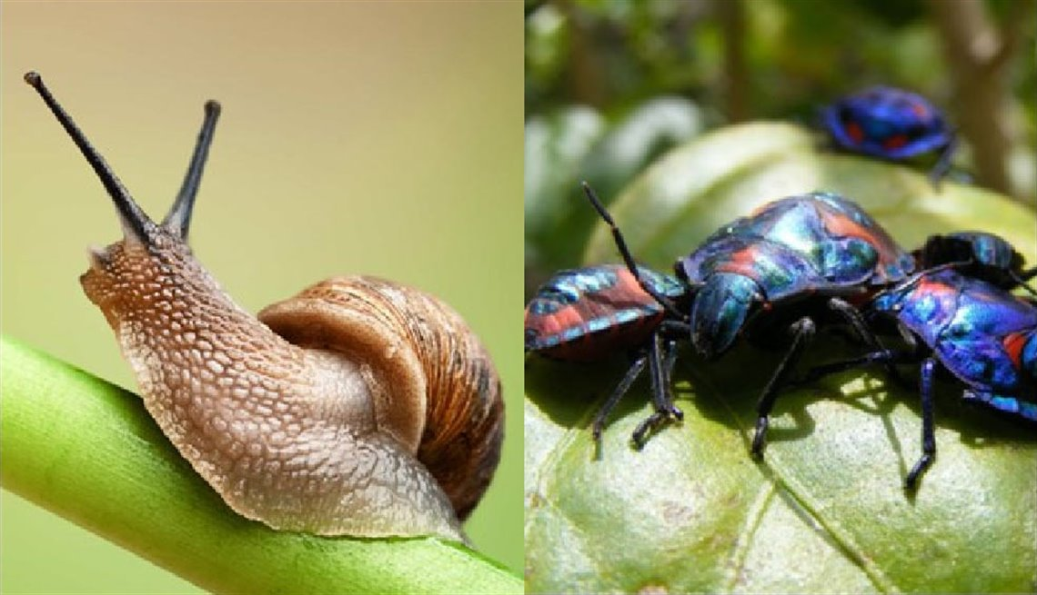 snail-and-beetle.jpg