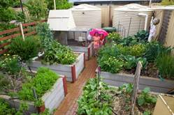 2017_mayors_garden_competition_winner_debbie_butler_edible_garden_individual.jpg