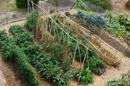 Sustainable Spring - Organic garden